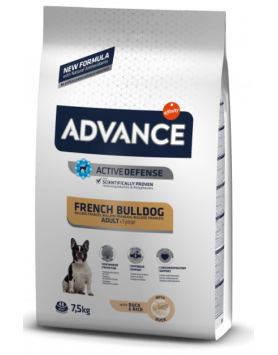 Advance Bulldog Francês